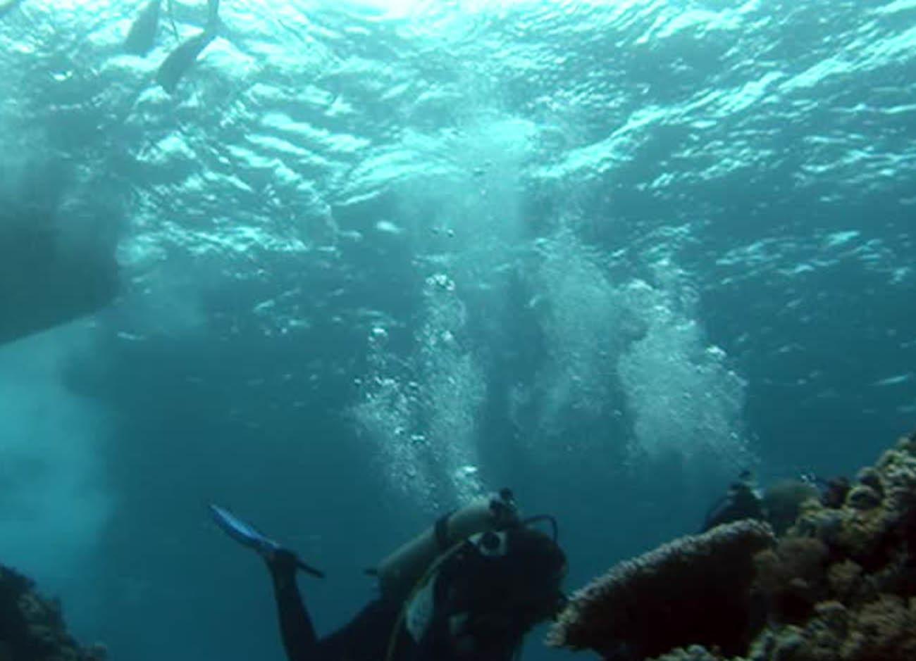 Jogchumskunst - Jogchum Veenstra kunst - Onderwater wereld 2014 inspiratie foto 1